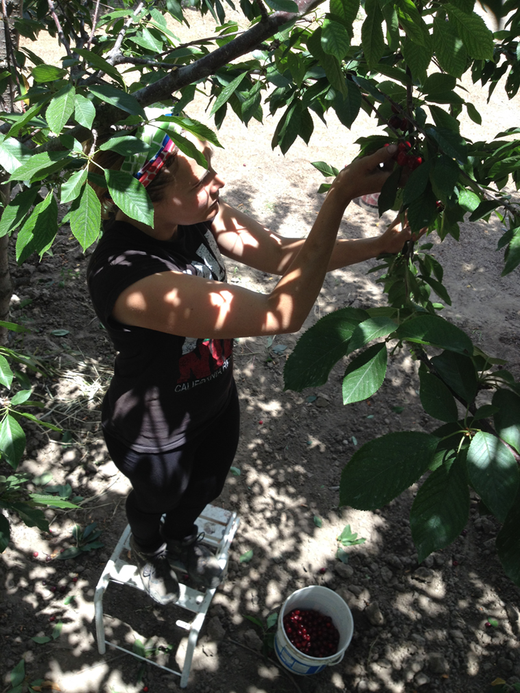 Picking cherries. One for you...one for me.