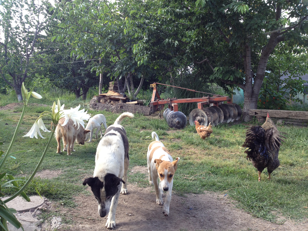 The menagerie of animals that kept us company on the farm.