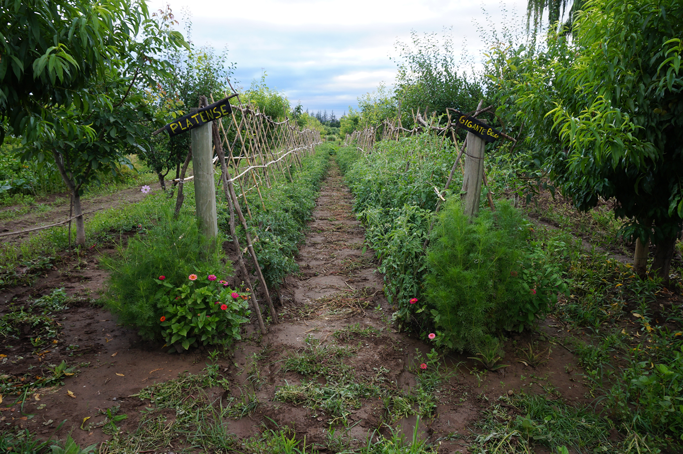The tomatoes weren't quite ready, but it would be great to be here during harvesting and preserving.